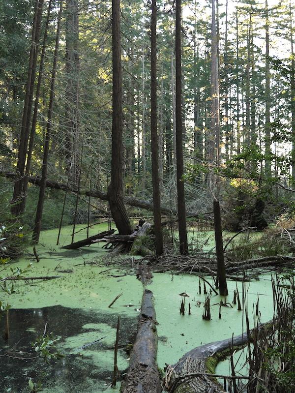Hiking the Cataract Falls Loop Trail. Photo by David Schnur